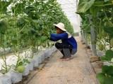 Xây dựng nhà máy chế biến rau, củ, quả xuất khẩu tại Tây Ninh