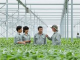 """VinEco: Ở đâu cũng nhắc đến nông nghiệp thông minh nhưng công nghệ """"Made in Vietnam"""" chưa nhiều"""