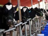 Sữa Mộc Châu cũng tìm đường sang thị trường Trung Quốc
